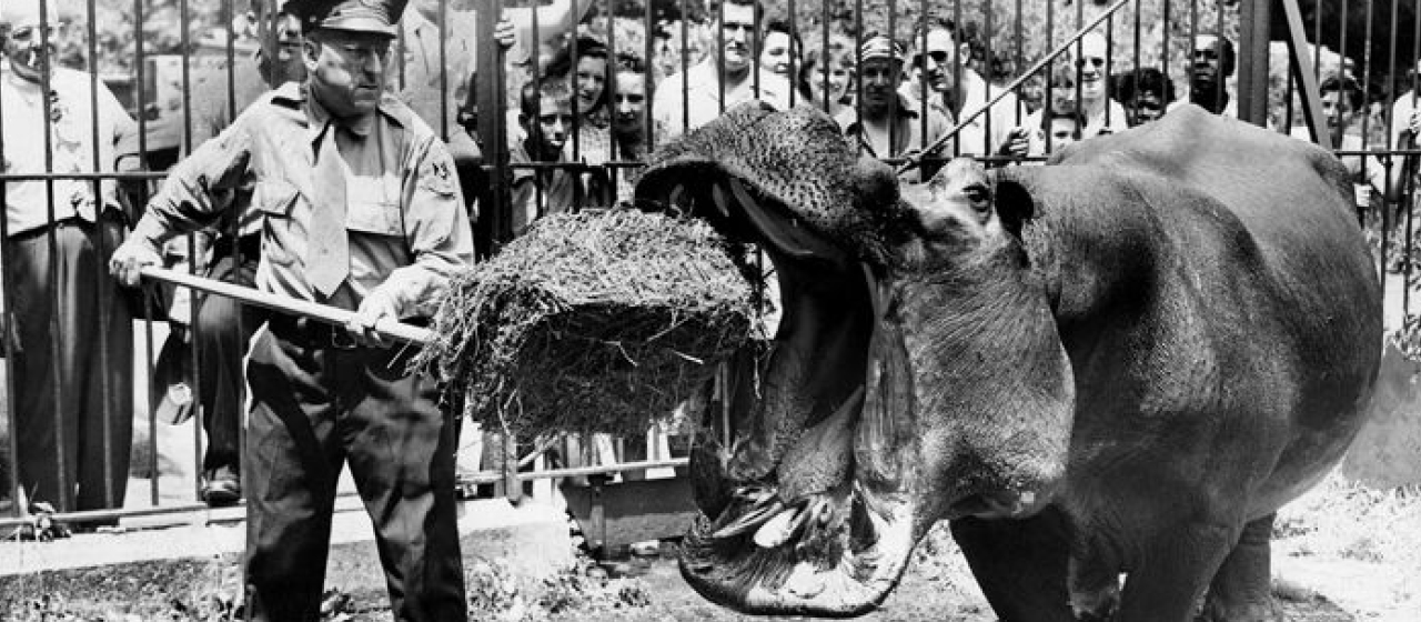 The History of Animals in NYC with Kevin Draper
