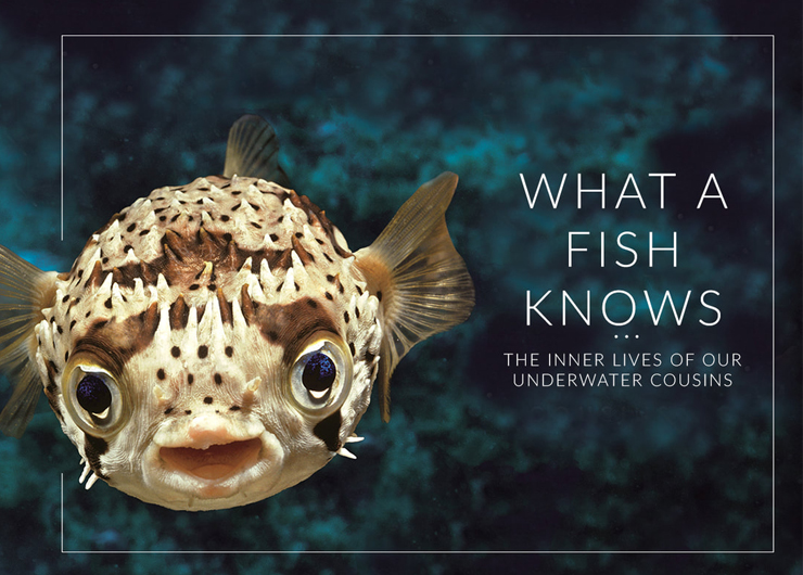 What a Fish Knows: A Conversation with Scientist and Author Jonathan Balcombe